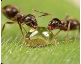 Как бороться с муравьями и медведкой